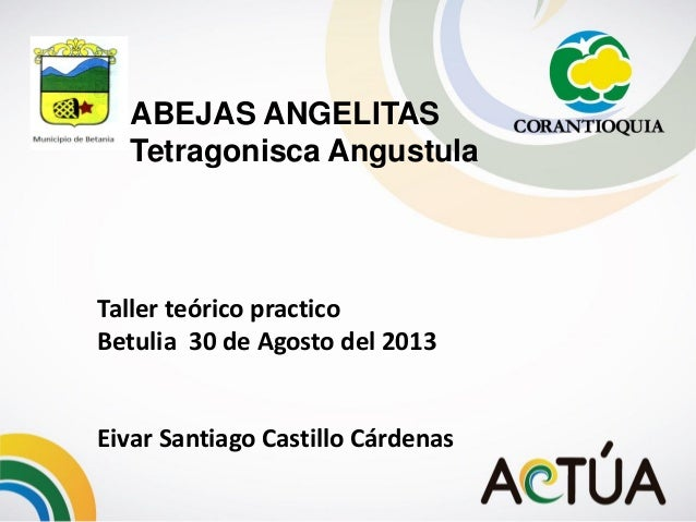 Taller teórico practico Betulia 30 de Agosto del 2013 Eivar Santiago Castillo Cárdenas ABEJAS ANGELITAS Tetragonisca Angus...