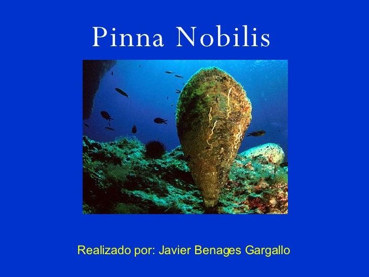 Pinna Nobilis Realizado por: Javier Benages Gargallo