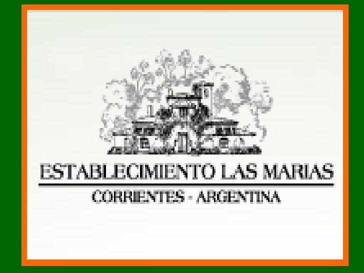 Presentación de Las Marias