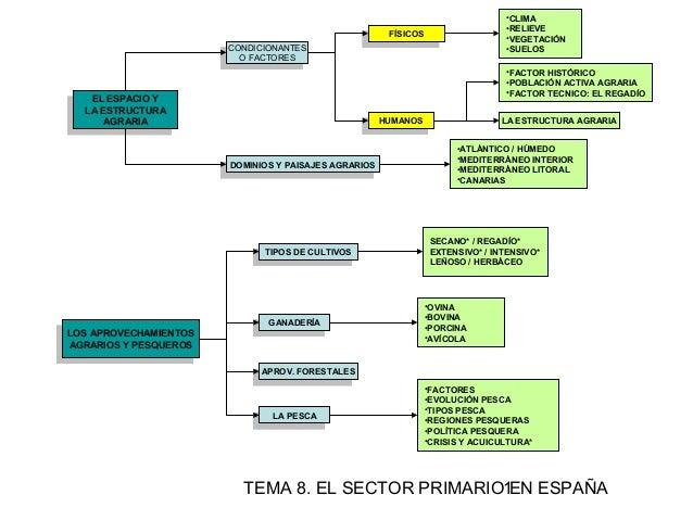 Sector primario en esquemas)