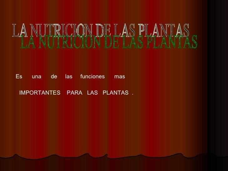 LA NUTRICION DE LAS PLANTAS Es  una  de  las  funciones  mas IMPORTANTES  PARA  LAS  PLANTAS  .