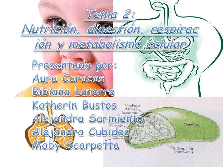 Tema 2: Nutrición, digestión, respiración y metabolismo celular<br />Presentado por:<br />Aura Caracas<br />Bibiana Latorr...