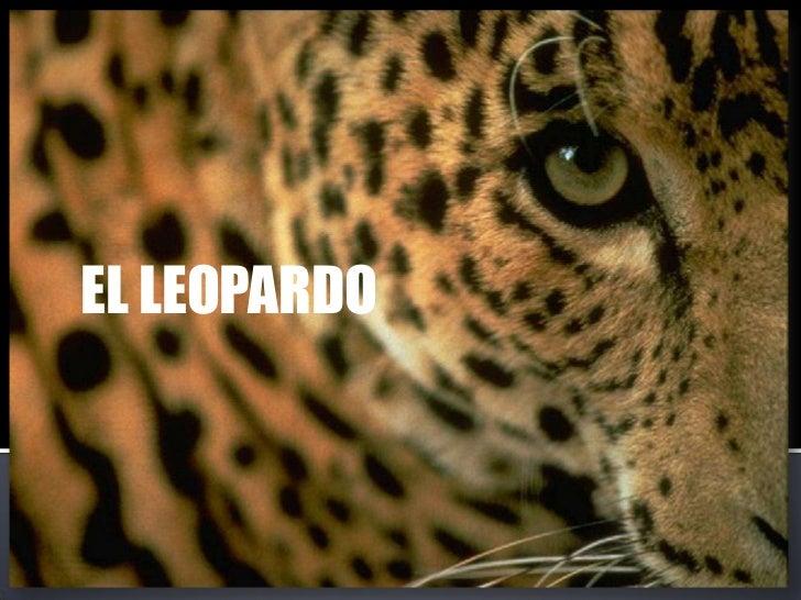 EL LEOPARDO<br />