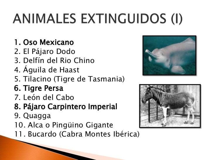 Animales extinguidos
