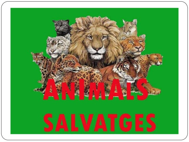 ANIMALS SALVATGES