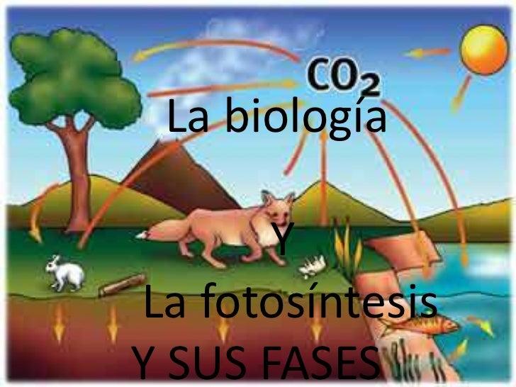 La biología <br />            Y <br /> La fotosíntesis Y SUS FASES<br />