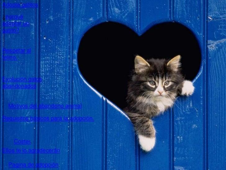 Adopta gatitos¿porquéadoptar ungatito?Respetar alfelino.Evolución gatosabandonados  Motivos del abandono animalRequisitos ...