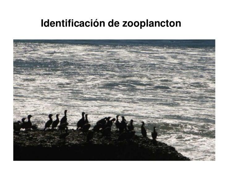 Identificación de zooplancton