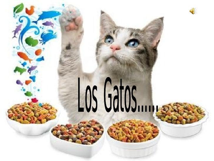 presentacion de gatos