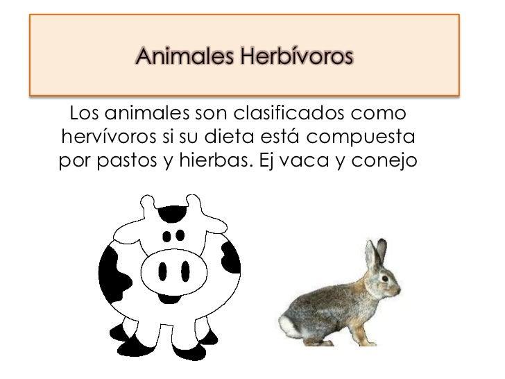 Animales Herbívoros Los animales son clasificados comohervívoros si su dieta está compuestapor pastos y hierbas. Ej vaca y...