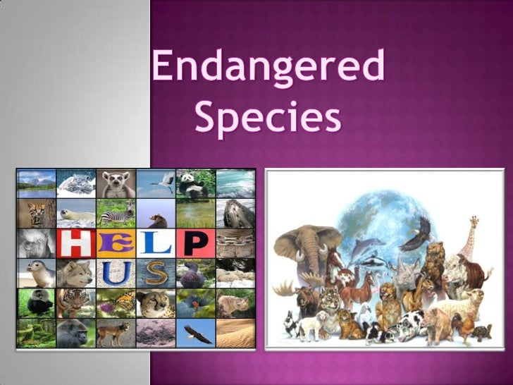    An endangered species is a population of organisms which is facing a    high risk of becoming extinct because it is ei...