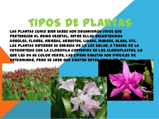 TIPOS DE PLANTASLas plantas como bien sabes son organismos vivos quepertenecen al reino vegetal. Entre ellas encontramosár...