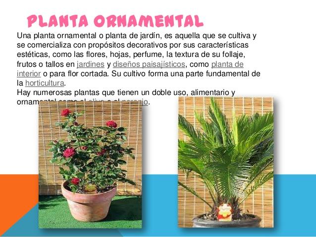 Clases de plantas - Tipos de plantas y sus cuidados ...