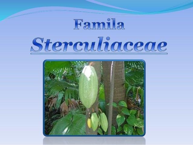 FamilaSterculiaceae<br />