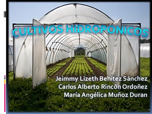 Jeimmy Lizeth Benítez SánchezCarlos Alberto Rincón OrdoñezMaría Angélica Muñoz Duran