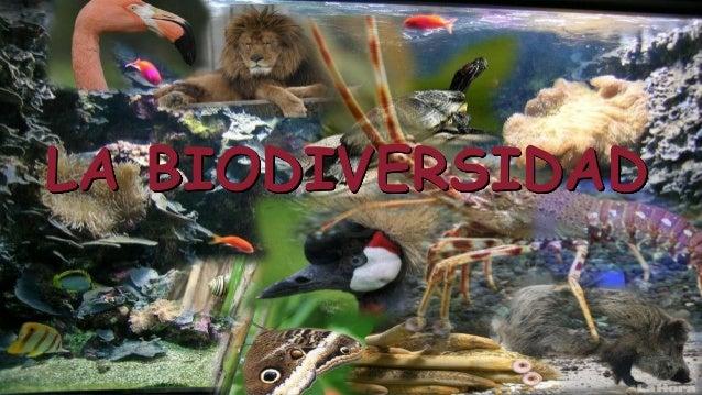 La biodiversidad y la importancia de su conservación