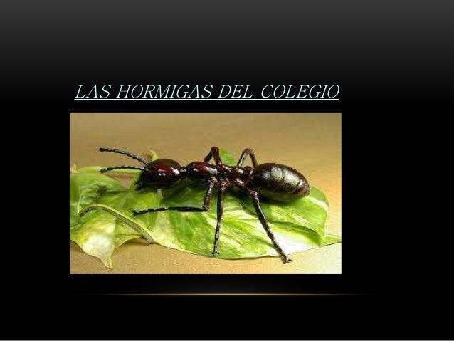 LAS HORMIGAS DEL COLEGIO