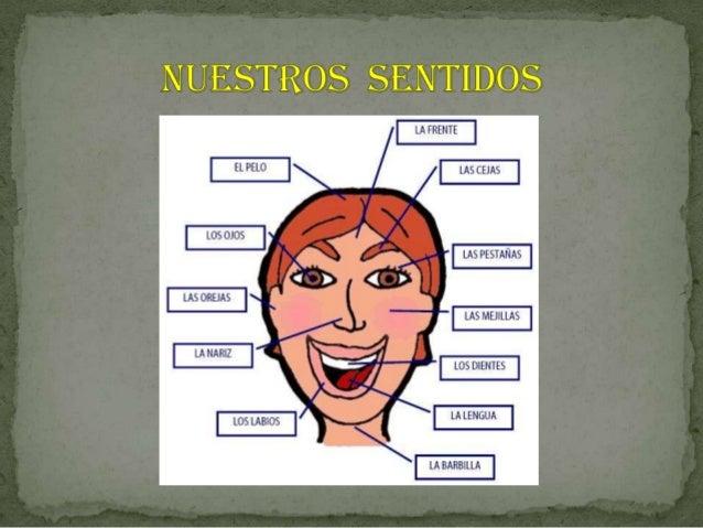 Presentación1 organo de los sentidos