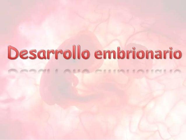 Primera semana de desarrolloOcurre: Fecundación Segmentación del cigoto ImplantaciónFecundación:es la unión de los game...