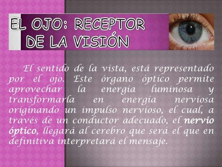El sentido de la vista, está representadopor el ojo. Este órgano óptico permiteaprovechar      la   energía    luminosa   ...