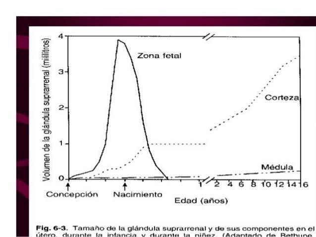 enzima sulfatasa esteroidea