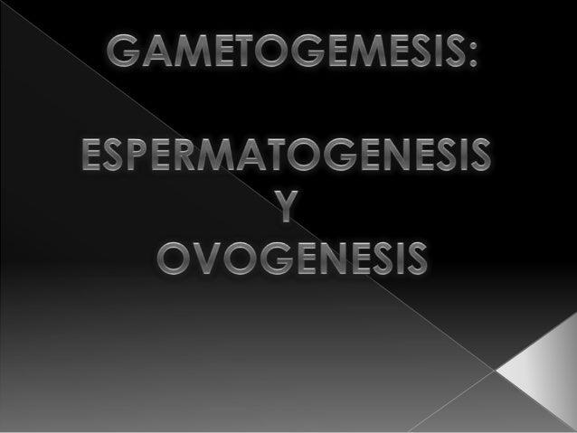  es la formación de gametos por medio de la MEIOSIS a partir de células germinales. Mediante este proceso el material gen...