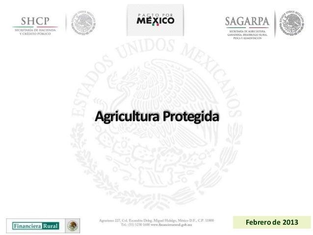Agricultura Protegida                        Febrero de 2013