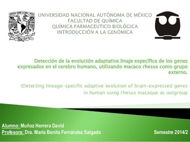 Detección de la evolución adaptativa linaje específica de los genes expresados en el cerebro humano, utilizando macaco r...