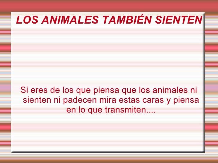 LOS ANIMALES TAMBIÉN SIENTEN Si eres de los que piensa que los animales ni sienten ni padecen mira estas caras y piensa en...