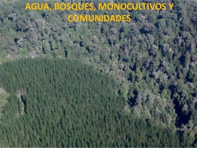 AGUA, BOSQUES, MONOCULTIVOS Y COMUNIDADES