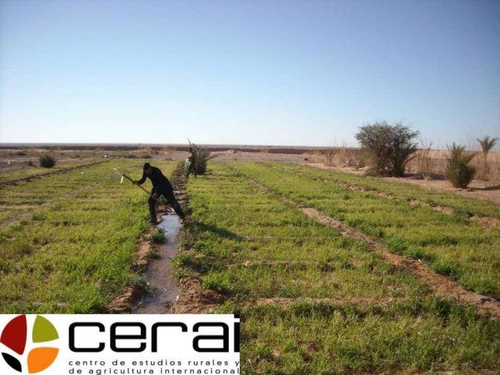 """Misión     """"En CERAI queremos contribuir a un desarrollo de las comunidades campesinas  basado en un enfoque agroecológico..."""