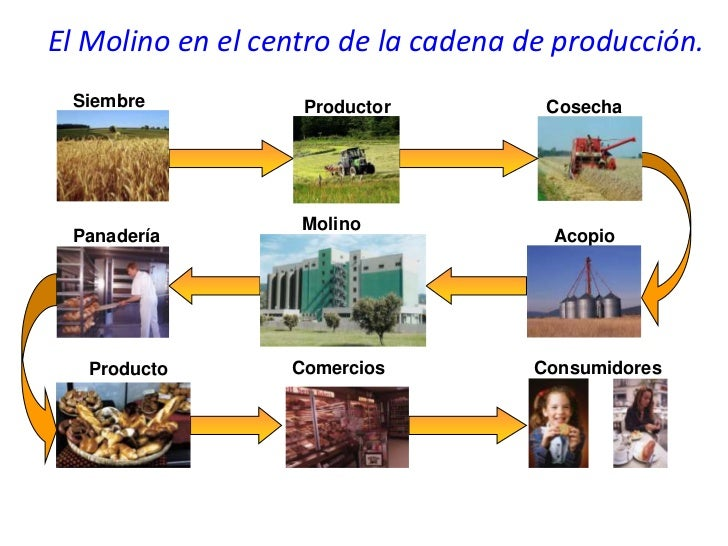 El Molino en el centro de la cadena de producción. Siembre           Productor          Cosecha                   Molino P...