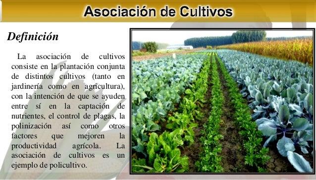 asociaci n y rotaci n de cultivos