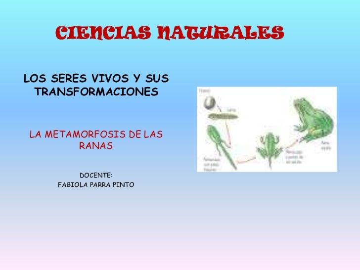 CIENCIAS NATURALES<br />LOS SERES VIVOS Y SUS TRANSFORMACIONES<br />LA METAMORFOSIS DE LAS RANAS<br />DOCENTE:<br />FABIOL...