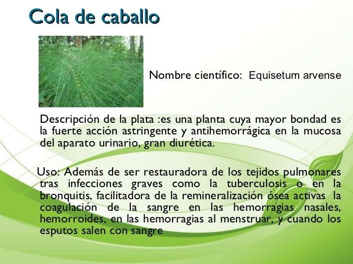 Plantas increibles plantas medicinales sin costo 100 Nombres de plantas comunes