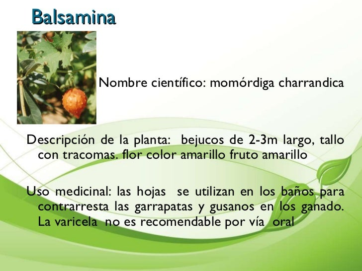 Presentaci n de plantas medicinales cartilla for Cuales son las plantas ornamentales y para que sirven
