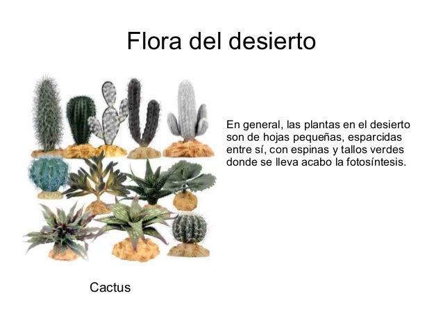flora del desierto en general las plantas en el desierto