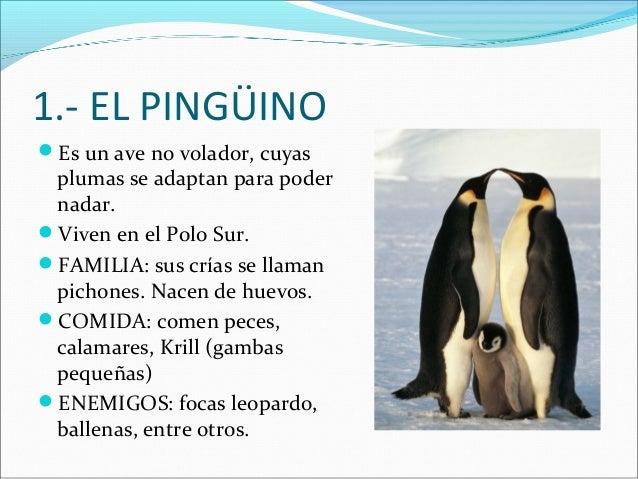 1.- EL PINGÜINO Es un ave no volador, cuyas  plumas se adaptan para poder nadar. Viven en el Polo Sur. FAMILIA: sus crí...