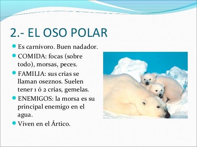 2.- EL OSO POLAR Es carnívoro. Buen nadador. COMIDA: focas (sobre  todo), morsas, peces. FAMILIA: sus crías se llaman o...