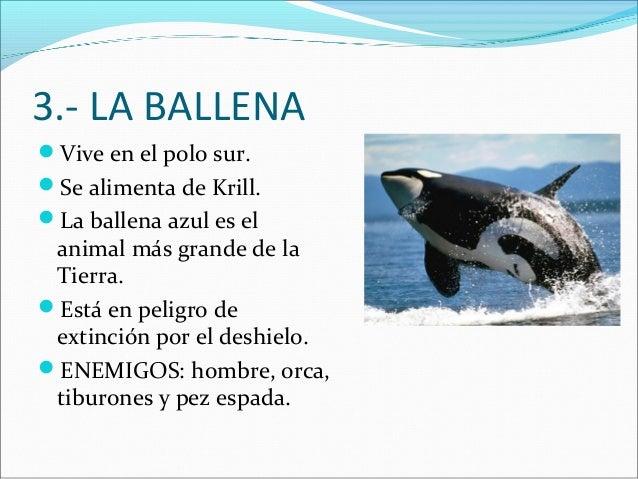 3.- LA BALLENA Vive en el polo sur. Se alimenta de Krill. La ballena azul es el  animal más grande de la Tierra. Está ...