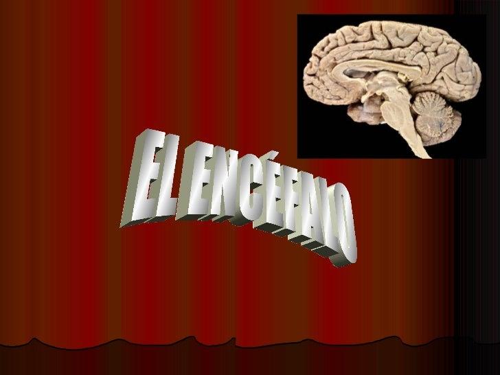 EL ENCEFALO PresentacióN ExposicióN PsicofisiologíA (Nueva)