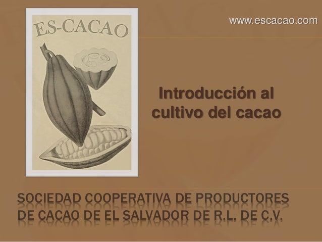 SOCIEDAD COOPERATIVA DE PRODUCTORES DE CACAO DE EL SALVADOR DE R.L. DE C.V. Introducción al cultivo del cacao www.escacao....