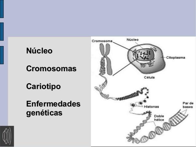 Núcleo Cromosomas Cariotipo Enfermedades genéticas