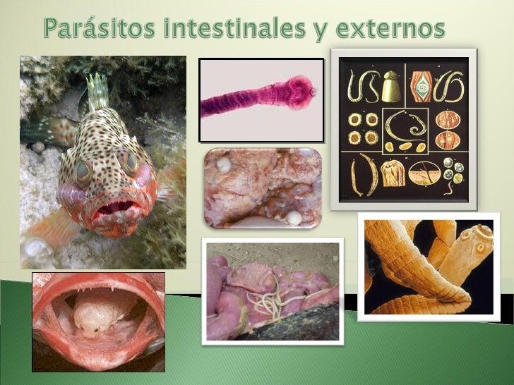 Parasitos Intestinales y otros