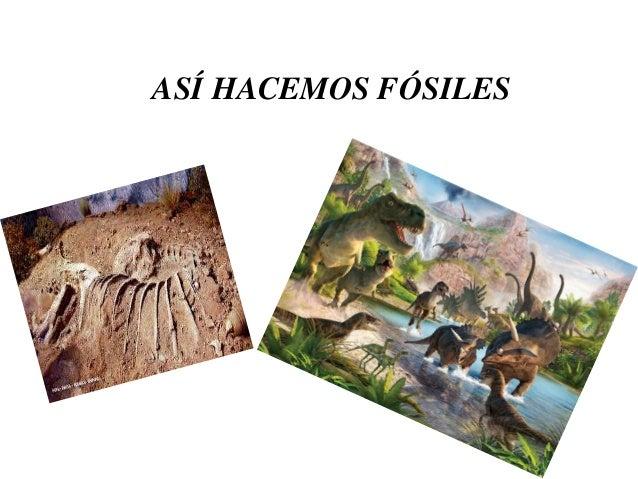 ASÍ HACEMOS FÓSILES