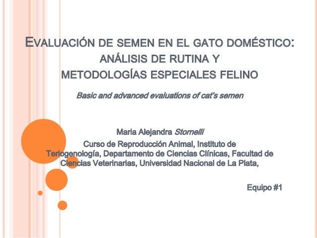 EVALUACIÓN DE SEMEN EN EL GATO DOMÉSTICO:                 ANÁLISIS DE RUTINA Y       METODOLOGÍAS ESPECIALES FELINO       ...