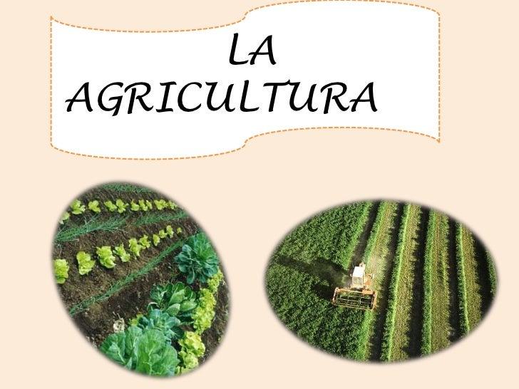 LA      AGRICULTURA<br />
