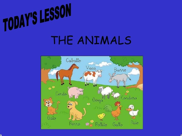 THE   ANIMALS TODAY'S LESSON