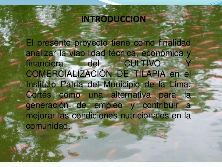 Presentaci n proyecto tilapia for Mojarra tilapia criadero