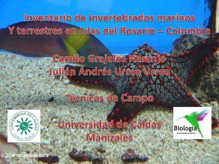 Inventario de invertebrados marinos<br />Y terrestres en Islas del Rosario – Colombia<br />Camilo Grajales Naranjo<br />Ju...